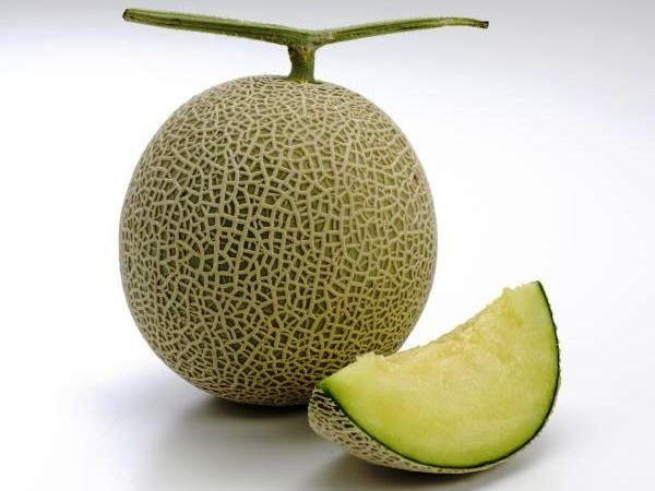 melon_01