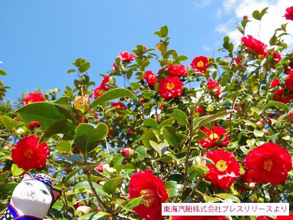 ohshima_1603_01